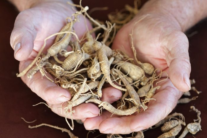 Holding Ginseng in hands